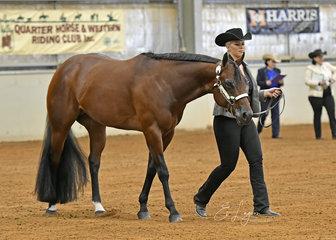 Champion Quarter Horse Stallion, Shadow Valley Doubtful, shown by Lana Kelderman