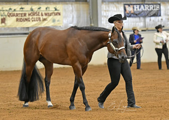 Champion Quarter Horse Stallion, Shadow Valley Doubtful, shown by Lana Kelderman