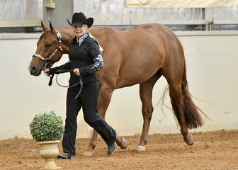 Lynda Cavello with Triandibo Super Diva showing in the Quarter Horse performance Mare of Filly Halter class. copy