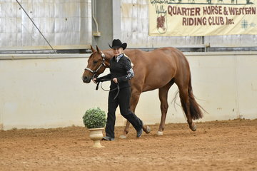 Lynda Cavello with Triandibo Super Diva showing in the Quarter Horse performance Mare of Filly Halter class.