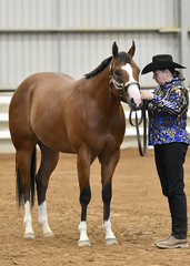 Sharon Winter showing Who Ya Been Kizzin, winnre of the Quarter Horse gelding, 2 years, under both judges
