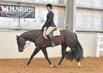 3 Year and Over Maiden Hunter Under Saddle winner, RD Livin The Dream ridden by Holly Johnson