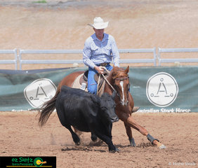 Putting his best hoof forward in the Novice Campdraft, Nonda Harvard with Bruce Coulthard in the saddle..