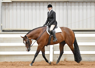 Ampleur Hot To Trot rodden by Raelene Gilboy in the Senior Horse Hunter Under Saddle