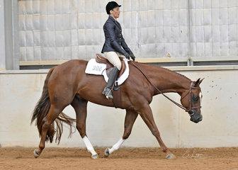 Annette Green rising CP Gunnahavsumfun in the Open Walk Trot Hunter Under Saddle