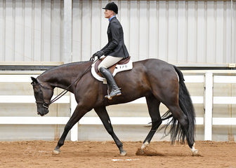 Kristy Mobberly riding Lopes N Dreams in the Junior Horse Hunter Under Saddle