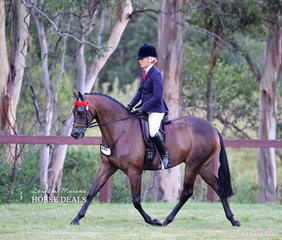 "Winner of the Newcomer Small Hack ""Royalwood West End"", ridden by Joanne Prestwidge."