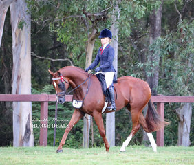 """Champion Newcomer Hack was Trina Crawford's """"Seventy Seven"""", ridden by Trinette Crawford."""