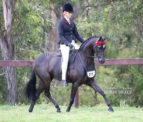 "Champion Newcomer Pony ""Pickwick Park Mr Darcy"" ridden by Courtney Cremasco."