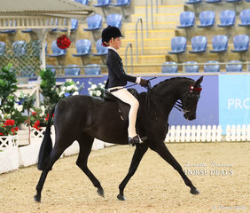 """Champion Child's Large Pony of the Year """"Nottingham Love Song"""" ridden by Elizabeth Taylor."""
