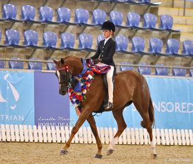 """Elizabeth Taylor had a successful day, pictured here on a victory lap with """"Laser Encore"""" who was declared Champion Child's Large Galloway of the Year."""