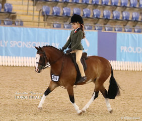"Pictured working out in the Child's Small Hunter Pony of the Year event is Isla Grubisa and ""Rivington Lil Red Corvette""."