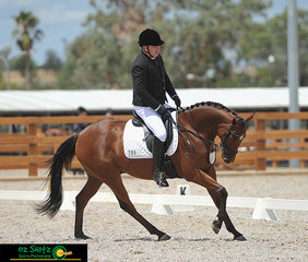 Owner and rider - Colin Hatch on his 6 year old stock horse Emugully Digger Terence riding a perfect canter in the Preliminary 1B class.