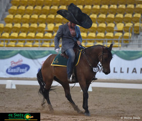Ever seen a horse Moonwalk - everyone at AELEC arena in Tamworth have now after Kym Hagon put on his white glove and his horse Manellae Bonnie moonwalked backwards across the arena