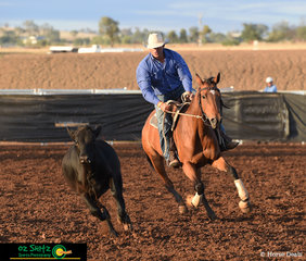 Competing in the Maiden Series Campdraft at the 2019 Australian Stock Horse National Show is Shane Palmer and Binnia Angelina.