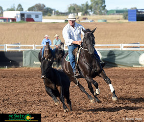 Eyes locked on the heifer, Trevor Niass riding Aldwyn Rivoli Rozay had a perfect round yesterday and pulled out another clean round today on the third day of the Australian Stock Horse Nationals.