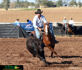 Staying in unison with the beast, Redrawn Gucci with rider Gavin White in the Maiden Series Campdraft at the 2019 Ausralian Stock Horse National Show held in Tamworth.