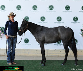 This grey filly, a one year old owned by Miss ZlL Frost from Charters Towers, QLD, at the Fountain of Youth Yearling Sales she sold for $7000.