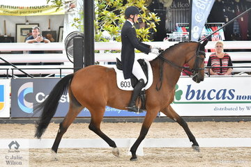Claire Plenty is pictured aboard her well performed Royal hit gelding, 'Adloo Richard' during the Prydes EasiFeeds/Canberra Airport CDI-Y Freestyle.