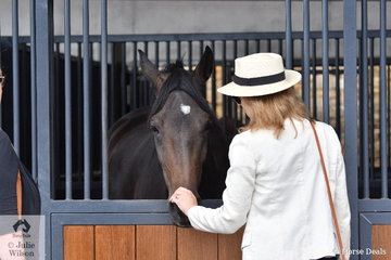 Spectators on Freestyle Saturday were able to wander around the beautiful stables and  get close up and personal with some of the Willinga Park horses.