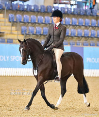 """Top 10 placegetter in the Medium Hunter Pony of the Year Championship """"Ascot Holly's Silk"""" ridden by Stephanie Murphy."""