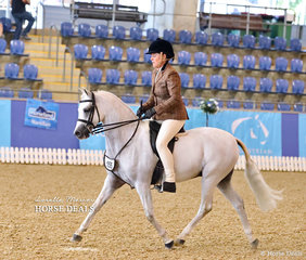"""Dianne Phillips' """"Koora Lyn Wedgewood"""" placed Top 10 in the Medium Hunter Pony of the Year event."""