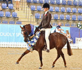 """""""Owendale Valencia"""" was ridden by Sarah Wheaton to win the Medium Hunter Pony of the Year title."""