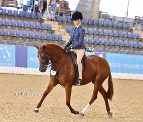 """Lucy Hocking and """"Astral Midsummernights Dream"""" placed in the Top 10 Large Hunter Pony Championship event."""