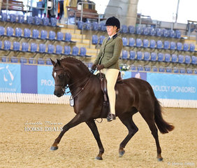 """Kate Treneman-Duncan and """"Owendale Rembrandt"""" showing the form that won them the Large Hunter Pony of the Year title."""