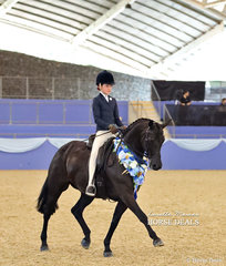 """Elizibeth Taylor on the lap of honour with the Champion Large Hunter Galloway of the Year """"EBL One Night In Paris""""."""