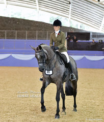 """Tammin Glover riding """"EBL Elysium"""" in the Small Show Hunter Hack of the Year Championship event."""