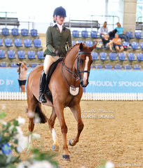 """""""Hanley Park Grand Finale"""" and Phoenix Passeri pictured working out in the Small Hunter Hack of the Year Championship event."""
