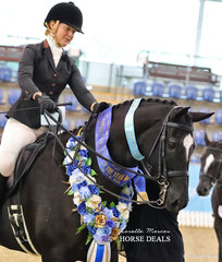 """""""Coldstream Ultimate"""" was declared Champion Small Hunter Hack of the Year, ridden by Sarah Olsen. On the previous day of competition Sarah was awarded Runner Up in the Rider 18-25 years event."""