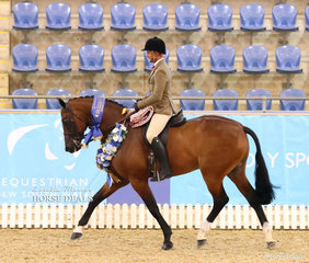 """Champion Large Show Hunter Hack """"Power Play"""" ridden by Rhys Stones."""