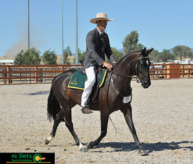 In the Hack Pattern on day four of the 2019 ASH National Show, Joel Blake and Binnia Hilfiger impressed onlookers with a successful test.