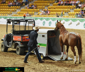 """Making the crowd cry with laughter Kym Hagon says """"He will fit, trust me!"""" to Dan Steers - he didnt give up and came back with a saddle and made him fit!"""
