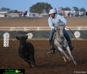 Heels down and eyes on where he wanted to go - Adam Wilson riding Stockyards Taylor unfortunately couldn't make the placings in todays Novice Campdraft Final but looks very professional despite a run out.