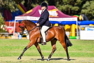 After huge success at Canberra royal Marcia beard rode her Rhyl Monarque to champion small pony