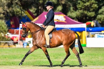 Whitmere Airs and Graces and Nicole Butcher won the champion large pony award, later in the day were awarded supreme open ridden exhibit and then the $500 Midway Ltd grand champion ridden exhibit.
