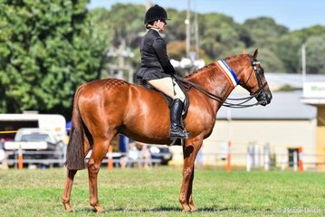Kara Woolcock and her lovely DP Ignite. Champion hack in ring one
