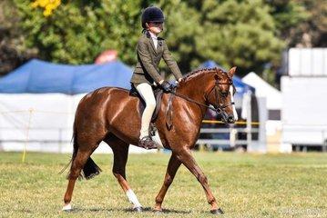 Taya Kelles riding Bandara Park premier. Champion hunter pony and champion child's large pony
