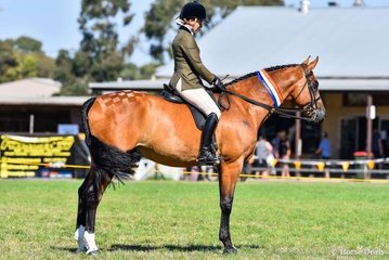 "Tori Merigold riding her champion hunter hack, and eventual supreme ridden show hunter ""Unanimous """