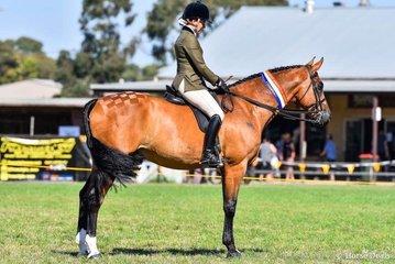 "Tori Merigold riding her champion hunter hack, and eventual supreme ridden show hunter ""Unanimous """