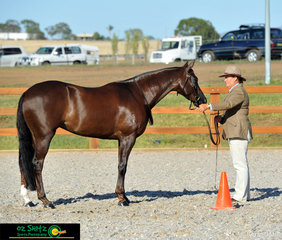 This stunning combination made up of Jenny Weule and Nethaway Touch of Class, shown competing in the Led Phase of the 2019 Australian Stock Horse Nationals Maturity.