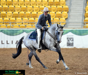 Standing out in the class full of browns and bays, Notus Powermax ridden by Brad Daunt looked exceptionally presented in the Working Phase of the 2019 Maturity National Show.