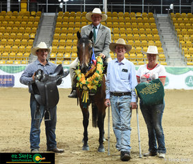 Winner of the 2019 ASH National Maturity was Annie's Gift ridden by Matthew Holz and owned by Brett and Mel Welsh.