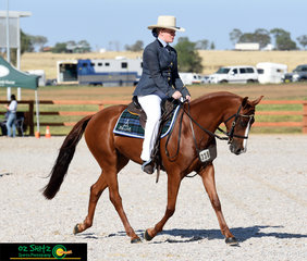 Riding in the Hack phase of the 2019 Baxter Boots and Shoes National Futurity Series is Jessica Caffyn and her 3 year old chestnut 'Glenn Lee Rivoli Tint'.