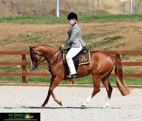 Riding in style, Erin Riordan and Nadriopark Quintessence complete the Hack Phase of the National Futurity Sereis at the 2019 Australian Stock Horse National Show.