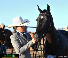 Getting ready for the day, Joelle Lindsay prepares her Futurity horse, Mahaaro Fair Dinkum for a big day at the 2019 Australian Stock Horse National Show.