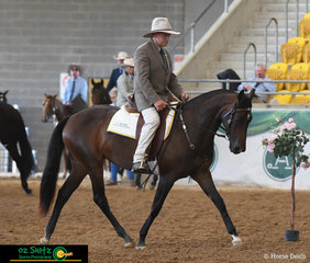 Displaying young talent in the Snaffle Bit Futurity, Robert Vandyke rode Icewood Fair to perfection in the main arena of the 2019 Australian Stock Horse Nationals Show.